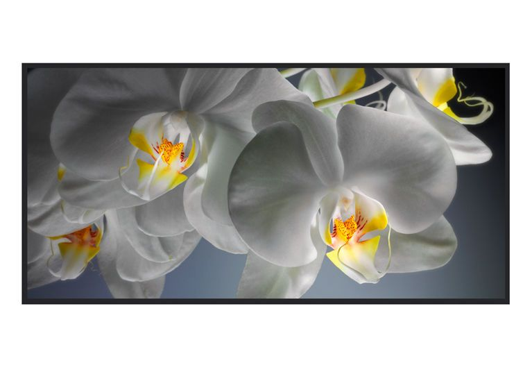 1r4__White_Orchid_6_