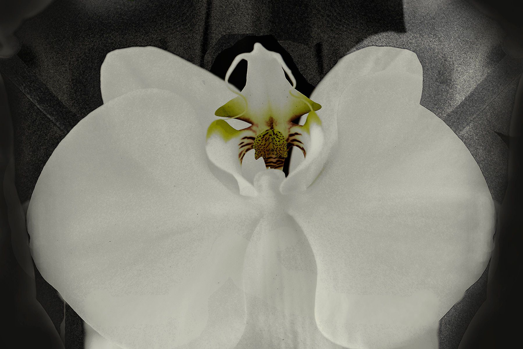 1orchid_in_charcoal_1