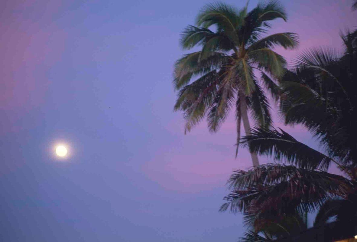 1r20100629_polynesia_tahiti_001