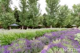 Garden 06-24.jpg