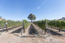 Winery 22-42.jpg