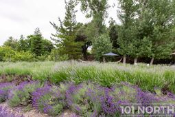 Garden 06-25.jpg