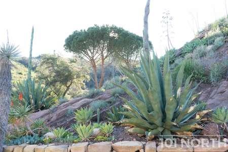 Garden 03-352.jpg