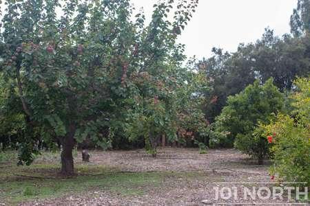 Garden 05-31.jpg