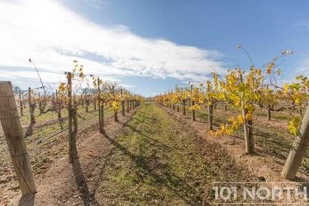 Winery 13-32.jpg