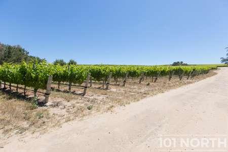 Winery 04-65.jpg