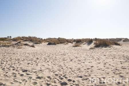 Beach 12-106.jpg