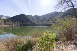 Pond 03-80.jpg