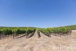 Winery 19-17.jpg