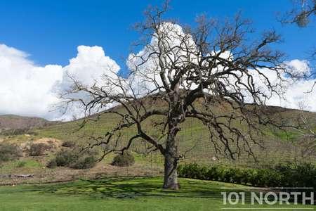 Winery 23-127.jpg