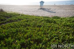 Beach 04-17.jpg