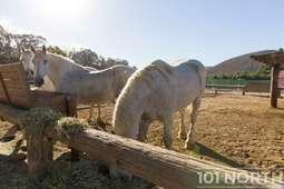 Ranch 16-60.jpg