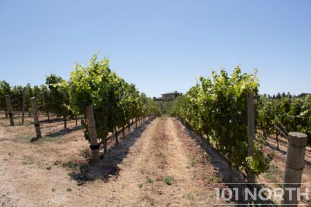 Winery 04-2.jpg