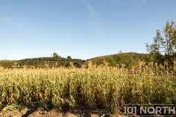 RanchFarm 37-174.jpg