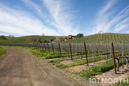 Winery 03-8.jpg