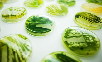Skin Deep: Scientists working with algae create skin care line