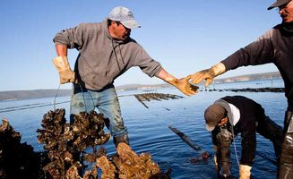 controversy surrounding the drakes bay oyster farm.