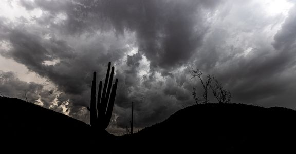 southwesttrip18_saguaro_sRGB_2880x1700_72ppi.jpg