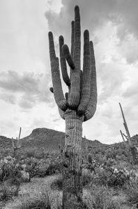 southwesttrip19_saguaro_sRGB_2880x1700_72ppi.jpg