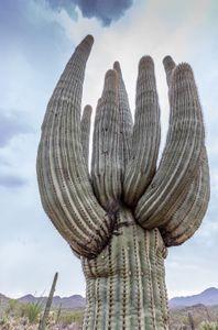southwesttrip20_saguaro_sRGB_2880x1700_72ppi.jpg