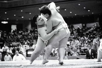 Wanapku sumo