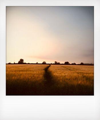 Solitude to Birdsong