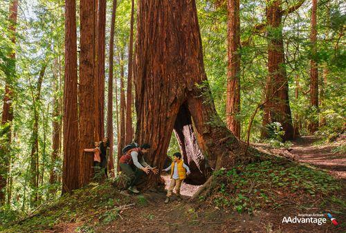 20190409_02_01_02584_trees_10k_rgb2.jpg