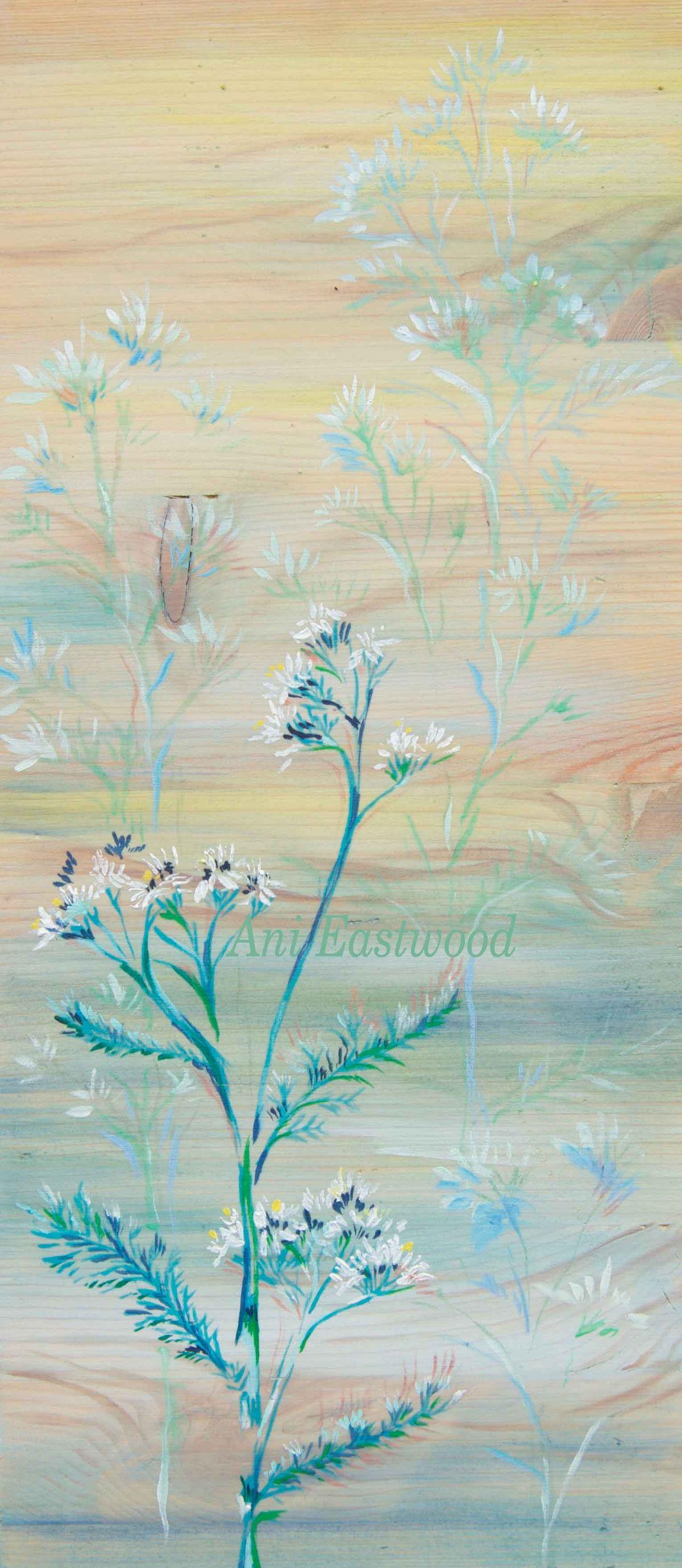 montana wildflowers