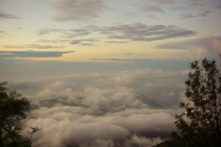 cloud-forest-2.jpg