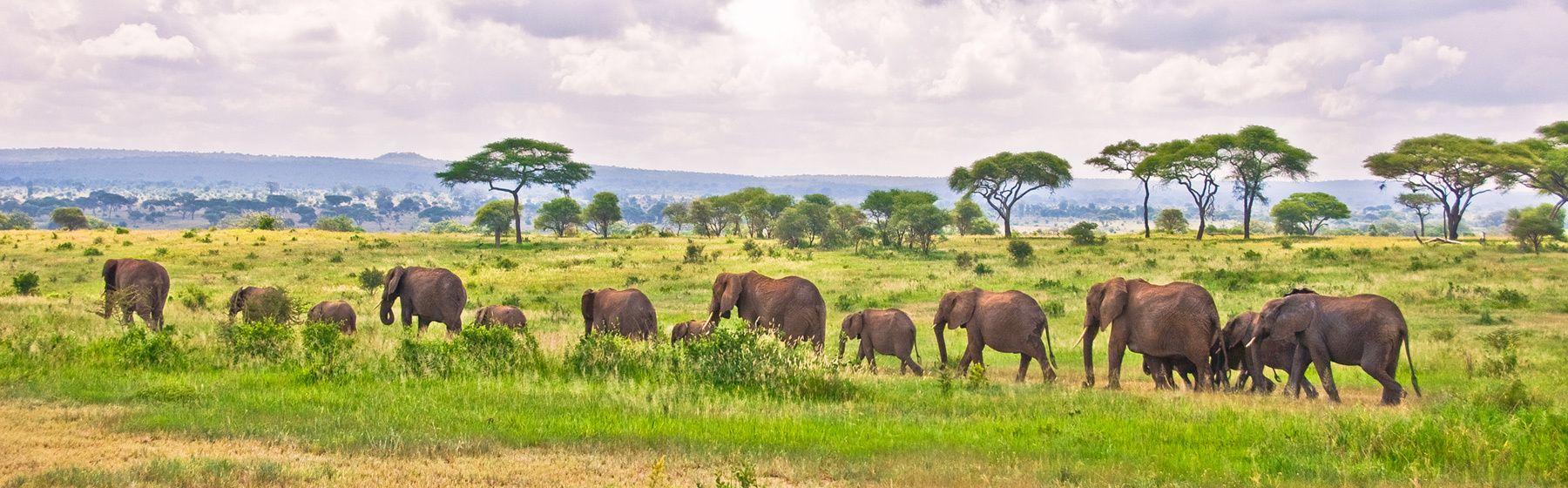 Elephant Parade, Tarangire National Park, Tanzania