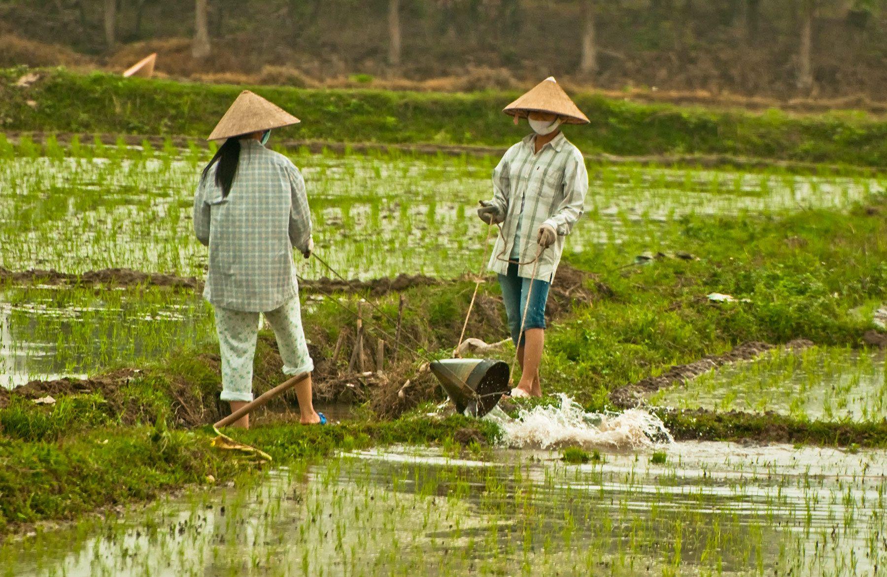 Workers irrigating rice fields, Northern Vietnam