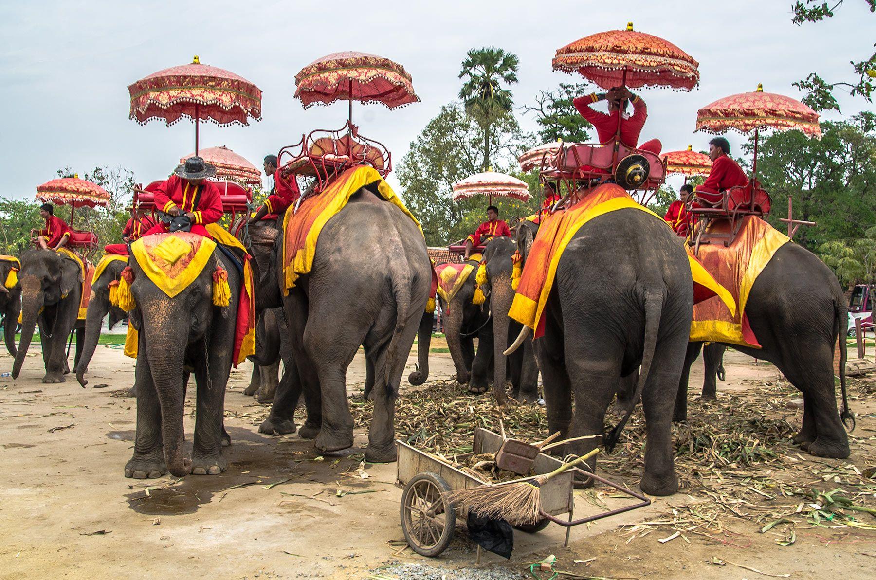 Elephants, Ayutthaya, Thailand