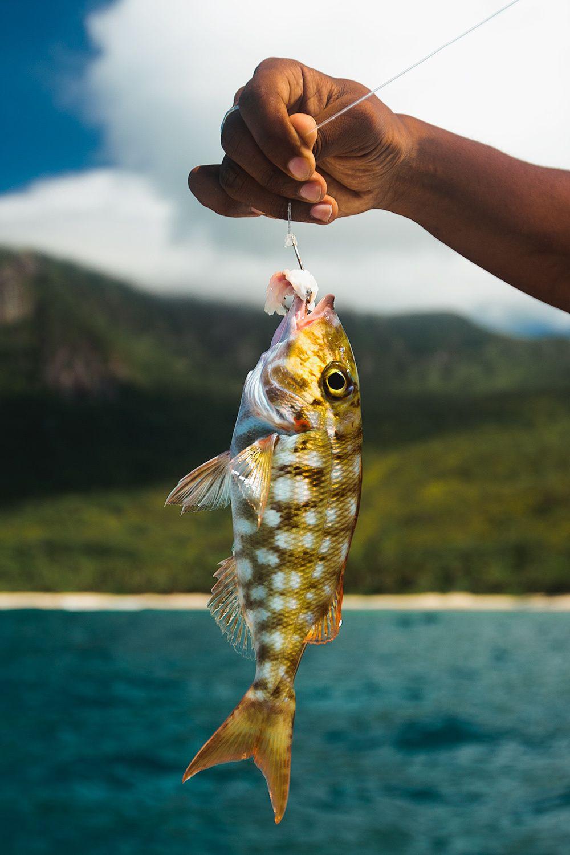 1seyfish