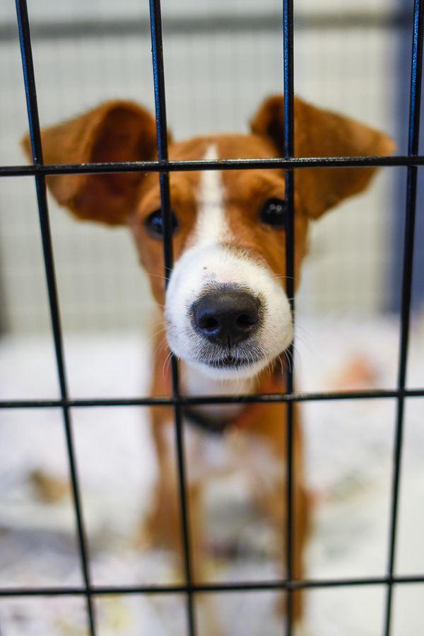 {Puppy dog Adoption