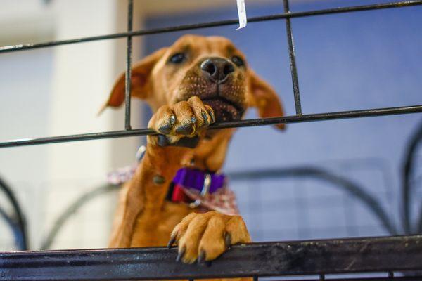 Puppy Dog Adoption