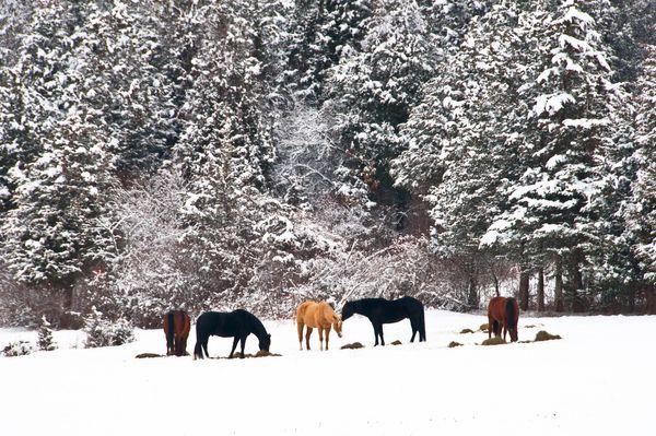 Horse in the Snow Durham CT