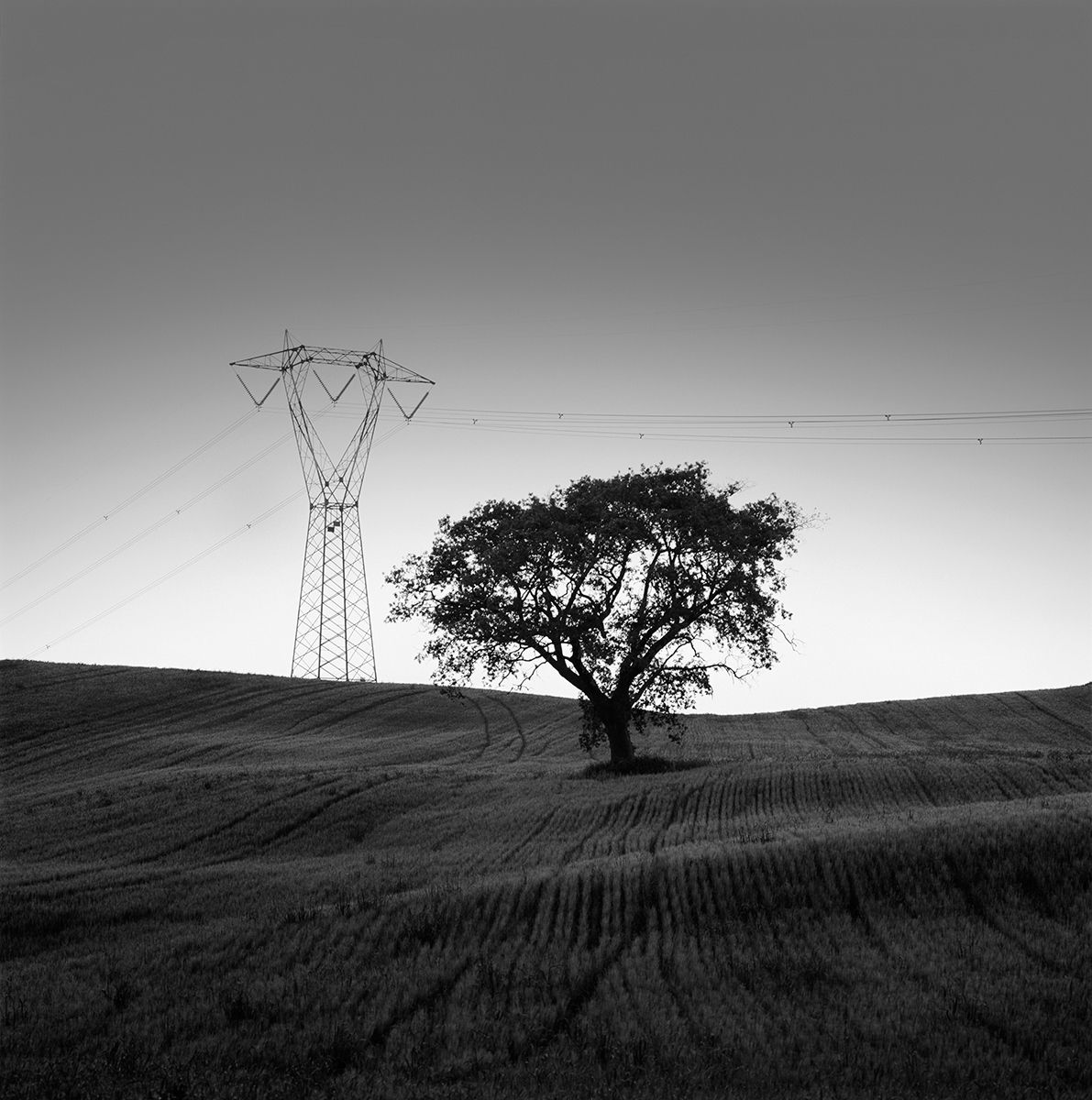 Tree and Powerlines   copy.jpg