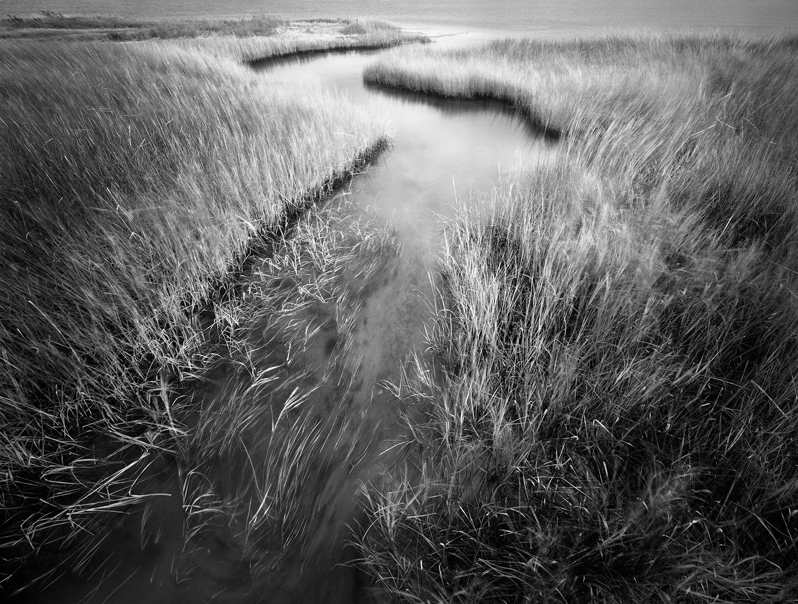 Meandering Estuary copy.jpg