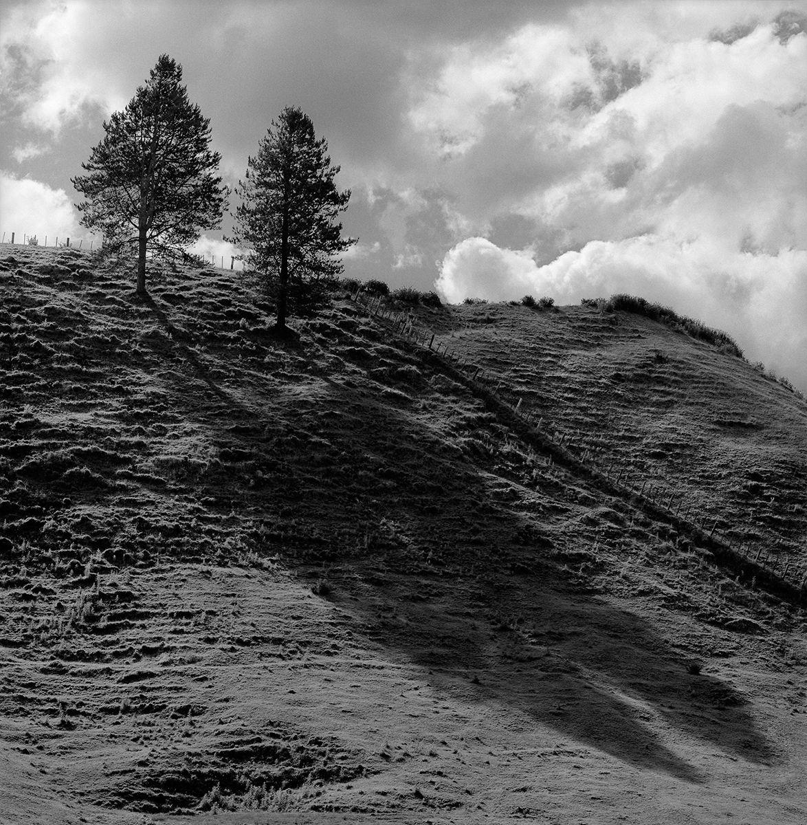 Tree Shadows  copy.jpg