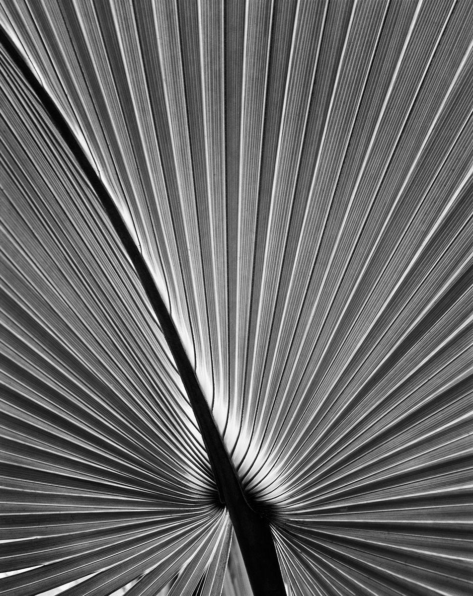 Palm Frond copy.jpg