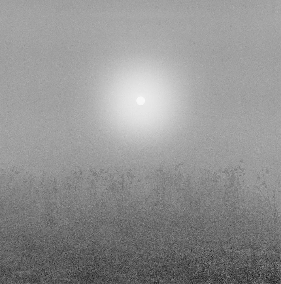 Field at Sunrise Final copy.jpg