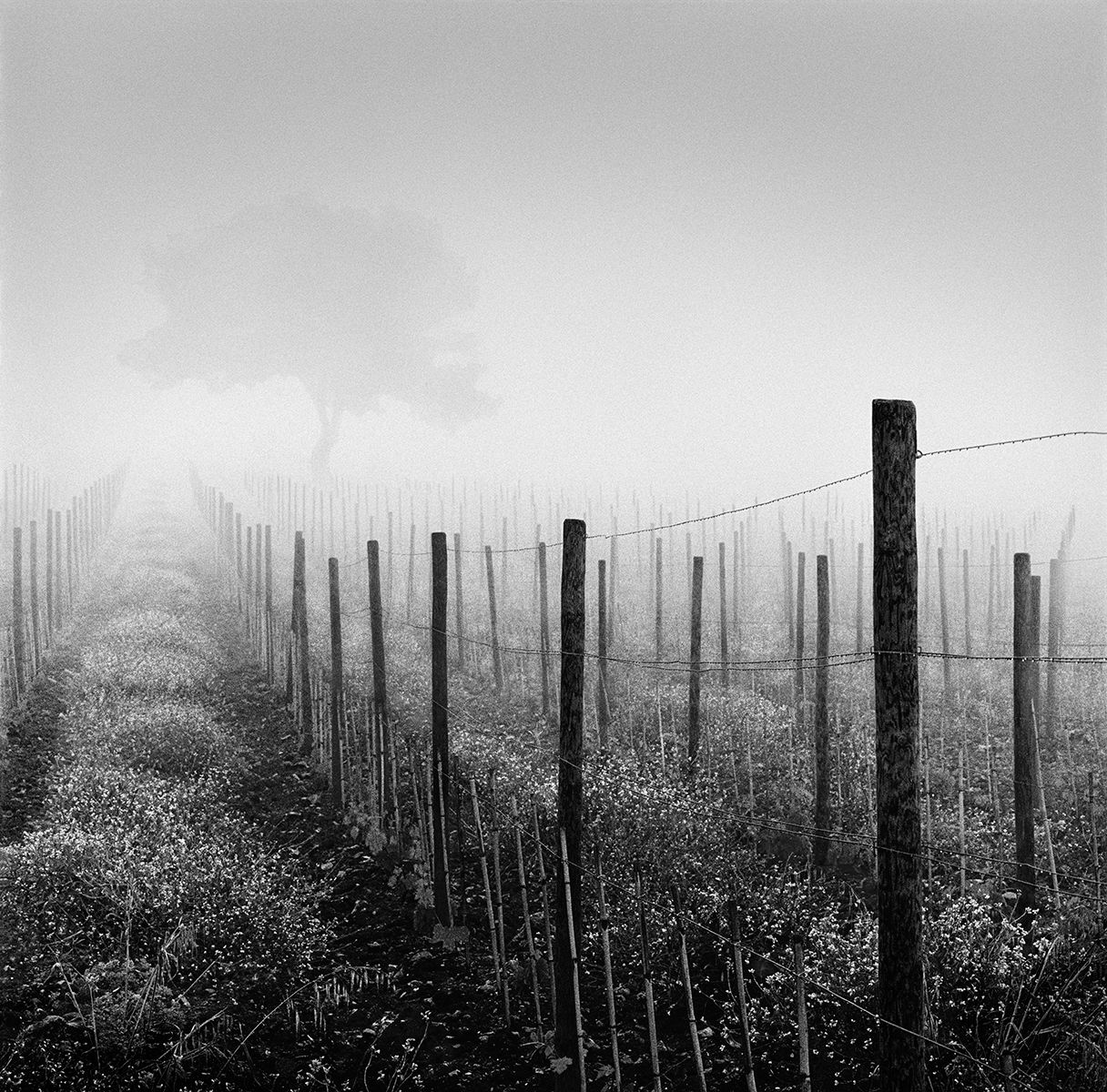 Vineyard At Dawn BEST  copy.jpg