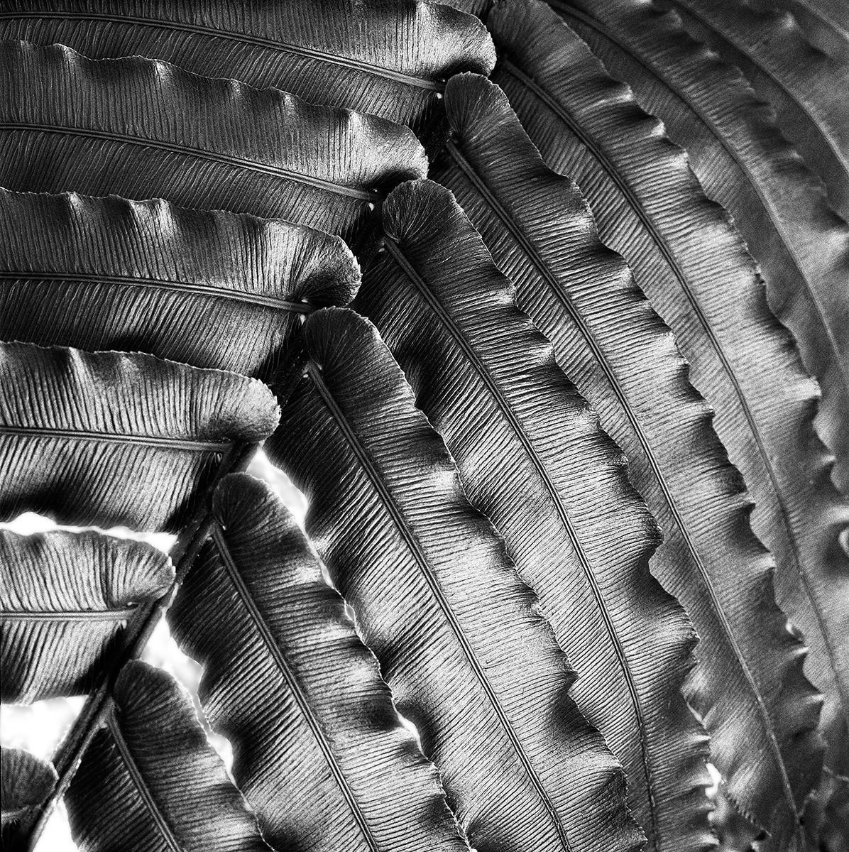 Leaf Layers Flat copy.jpg