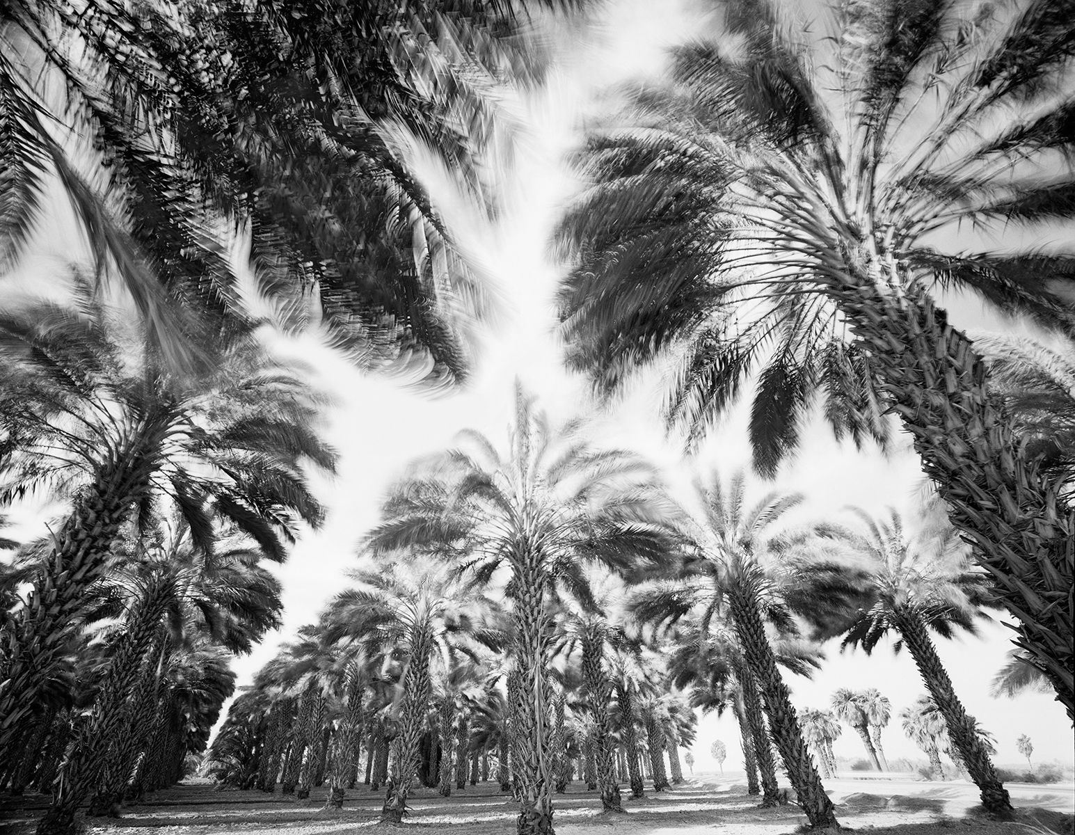 Spinning Palm-crop copy.jpg