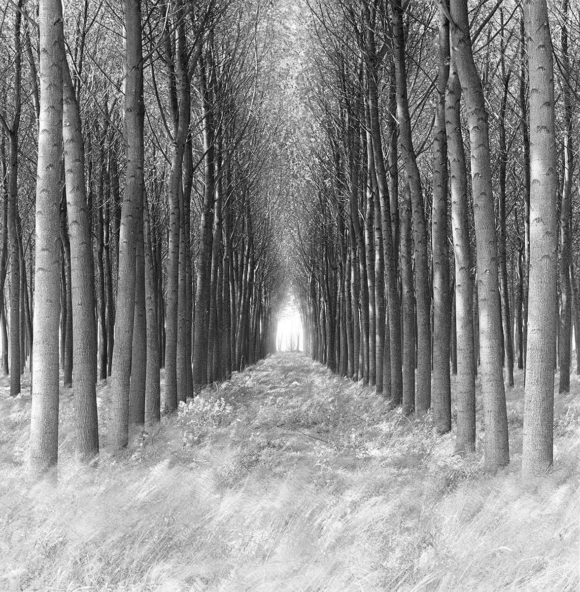 Tree Tunnel   copy.jpg