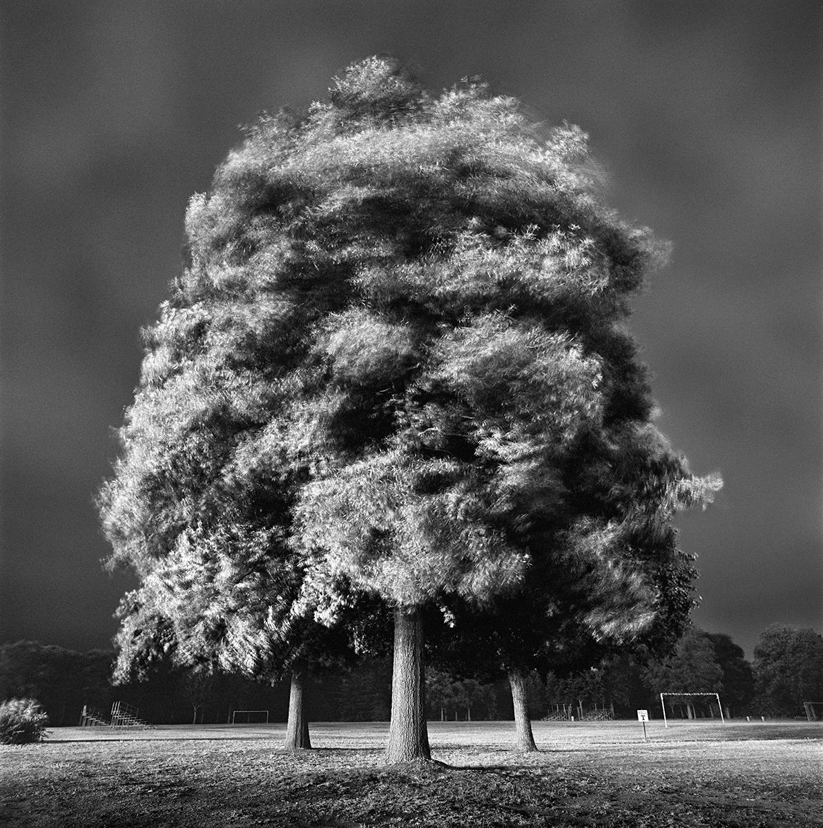 3 Trees Rev 1 Flat copy.jpg