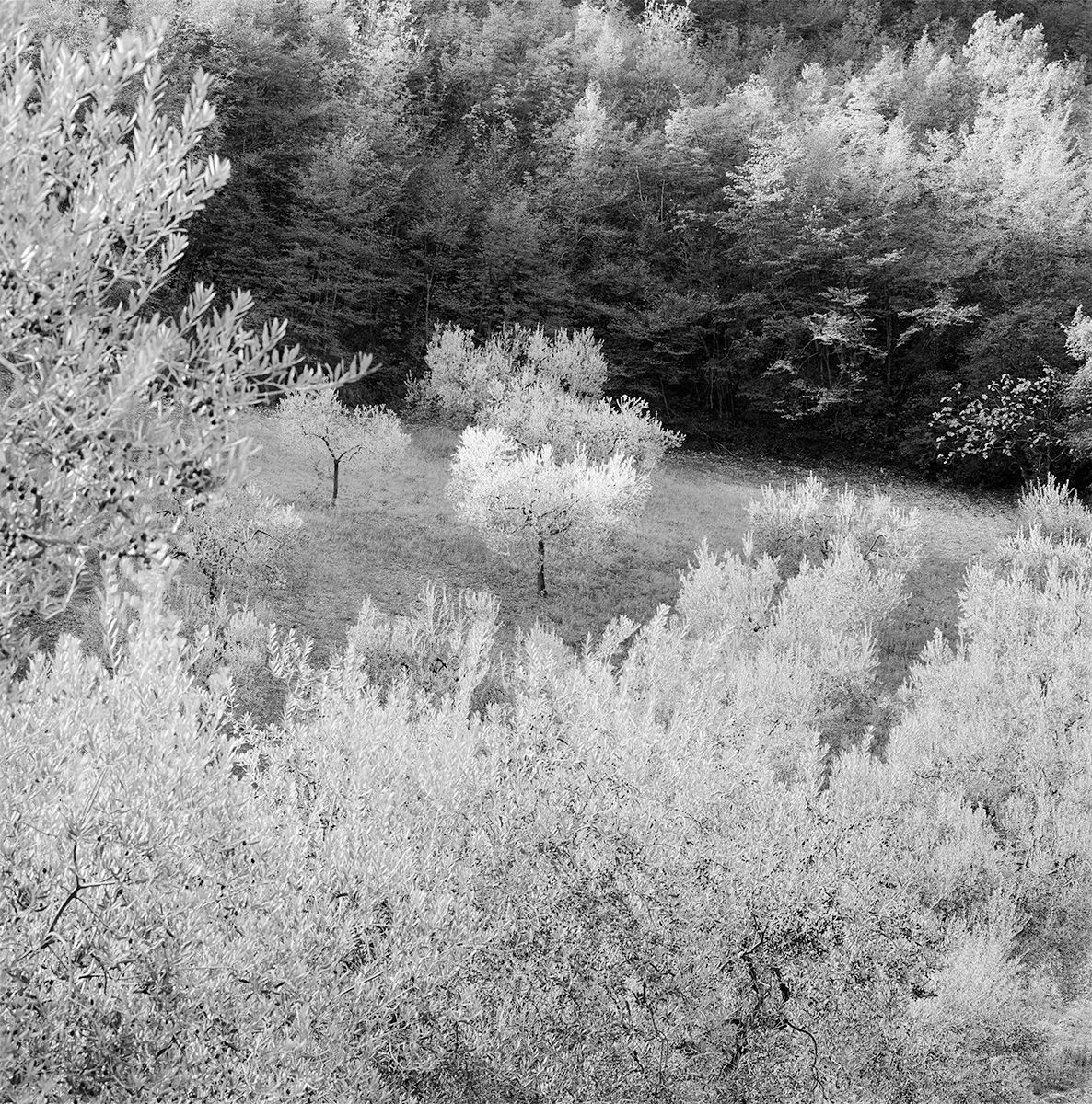 Silver Trees Flat GOOD copy.jpg