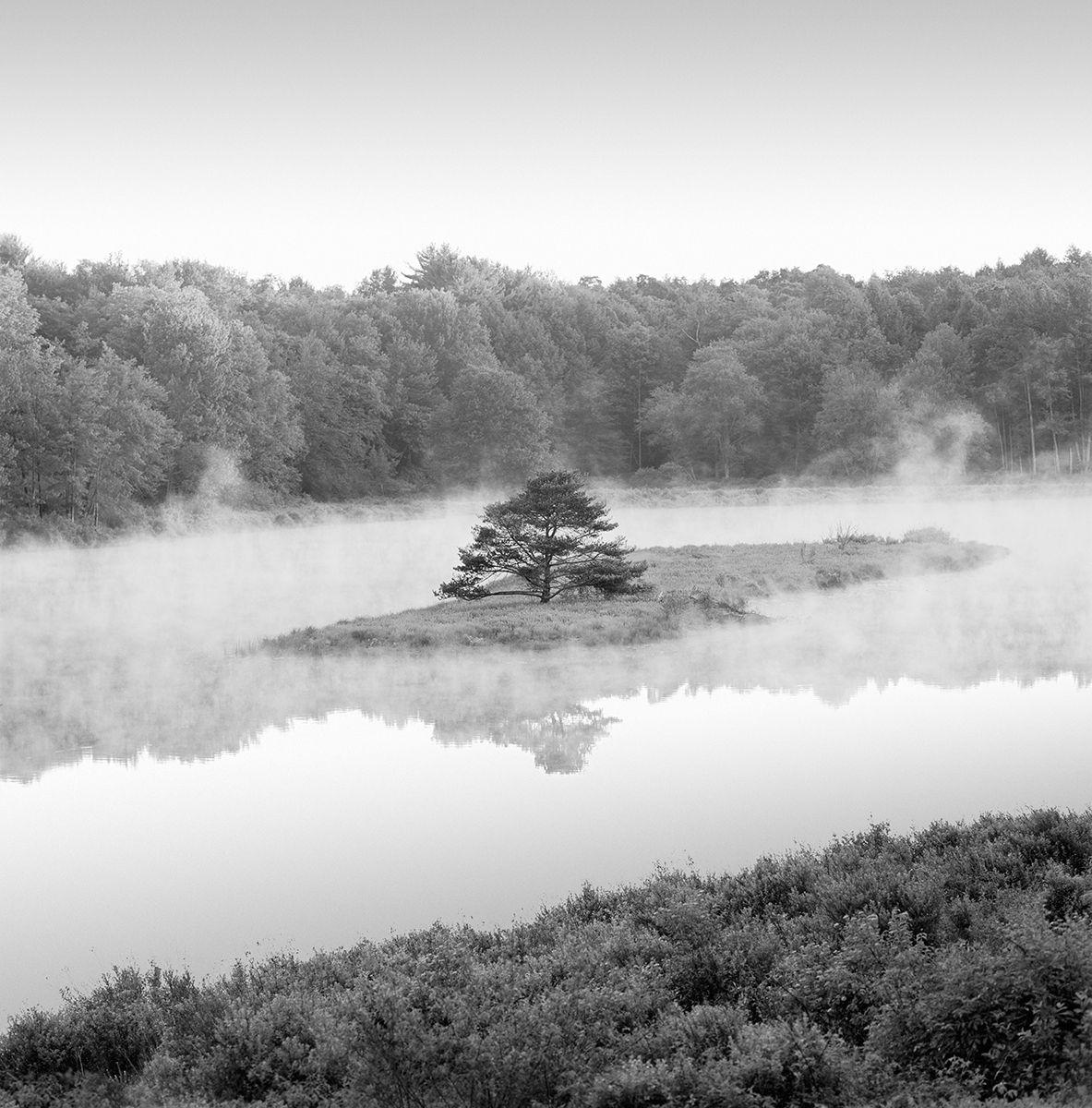 Tree Island - Sullivan County BEST copy.jpg