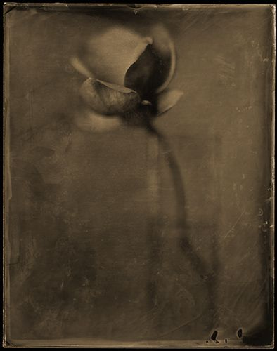 vase   with   single   flower