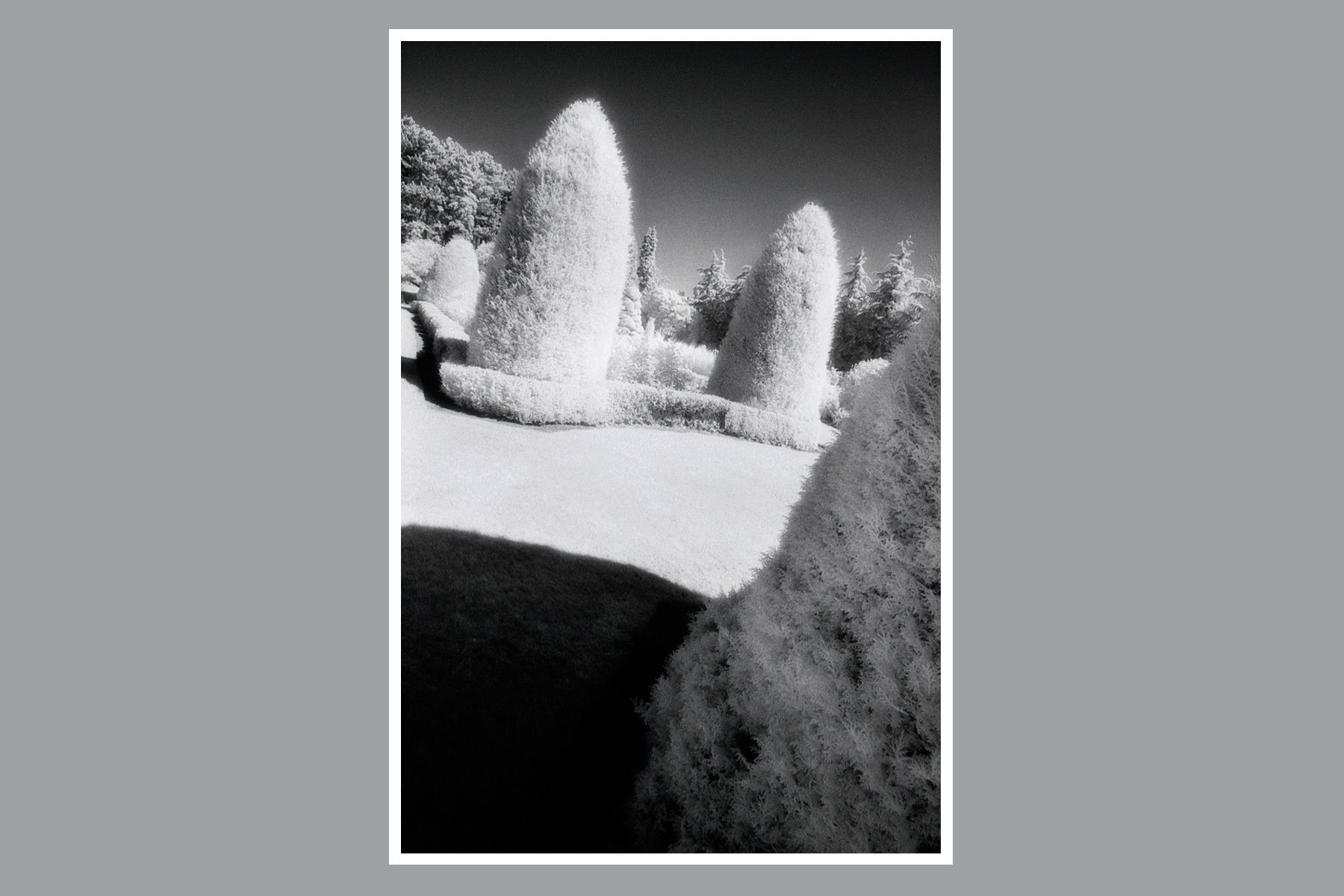 1topiary_vertical_white_fur.jpg
